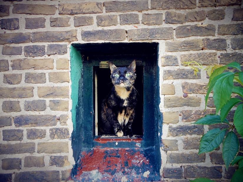 cat portret, beautiful cats